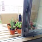 ベランダ菜園の棚DIYと、種まきの記録