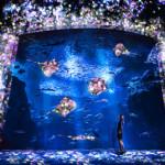 今一番行きたい場所:夜の光の水族館 えのすい×チームラボ「ナイトワンダーアクアリウム2015」