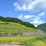 小豆島旅行:ヤマロク醤油、手延べそうめん「なかぶ庵」、中山千枚田、戸形小学校