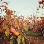 季節を楽しむ工夫〜旬の果物狩りを、家族の恒例行事に